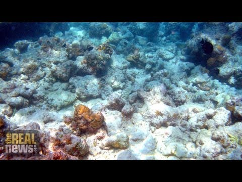 New Report: World's Oceans and Marine Life Face Unprecedented Peril Pt.1