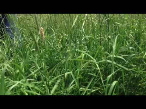 Millborn #3 Hay & Pasture Mix