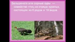 Птицы отряда Куриные.AVI