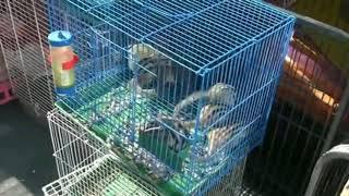 ПОЛИНА! Прогулка рынок животных  Китай 2018