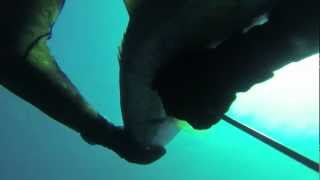 Pania reef Hawkes Bay Spearfishing.