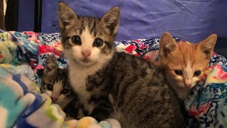 Bringing Home New Foster Kittens!