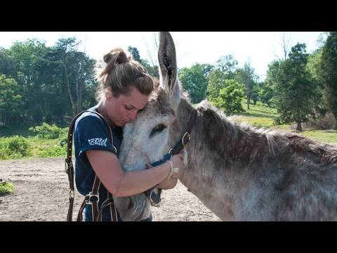 West Virginia Equine Rescue