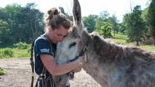 West Virginia Equine Rescue