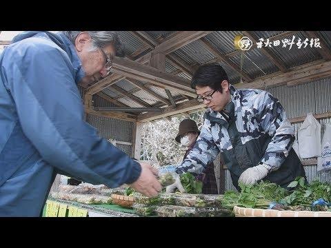 山菜、店頭にずらり 秋田市の直売所