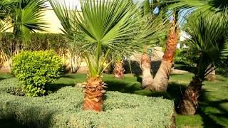 Египет, Красное море, г.  Хургада, отель Lilly Land 4*