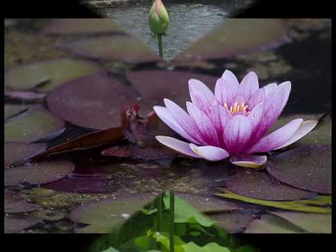 Music slideshow - Lotus out of water