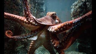 Secret Life in Oceans - Ocean Monsters (Documentary)
