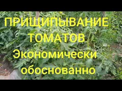 Прищипывание верхушки томатов. Сколько кистей оставлять.