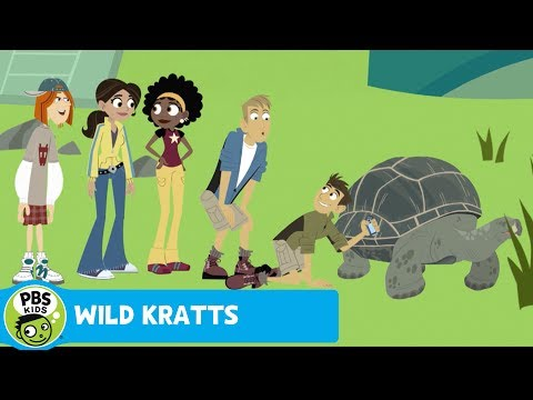 WILD KRATTS | Meeting Grandpa Tortoise | PBS KIDS