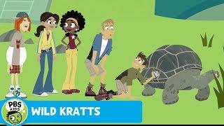 Wild kratts | meeting grandpa tortoise | pbs kids