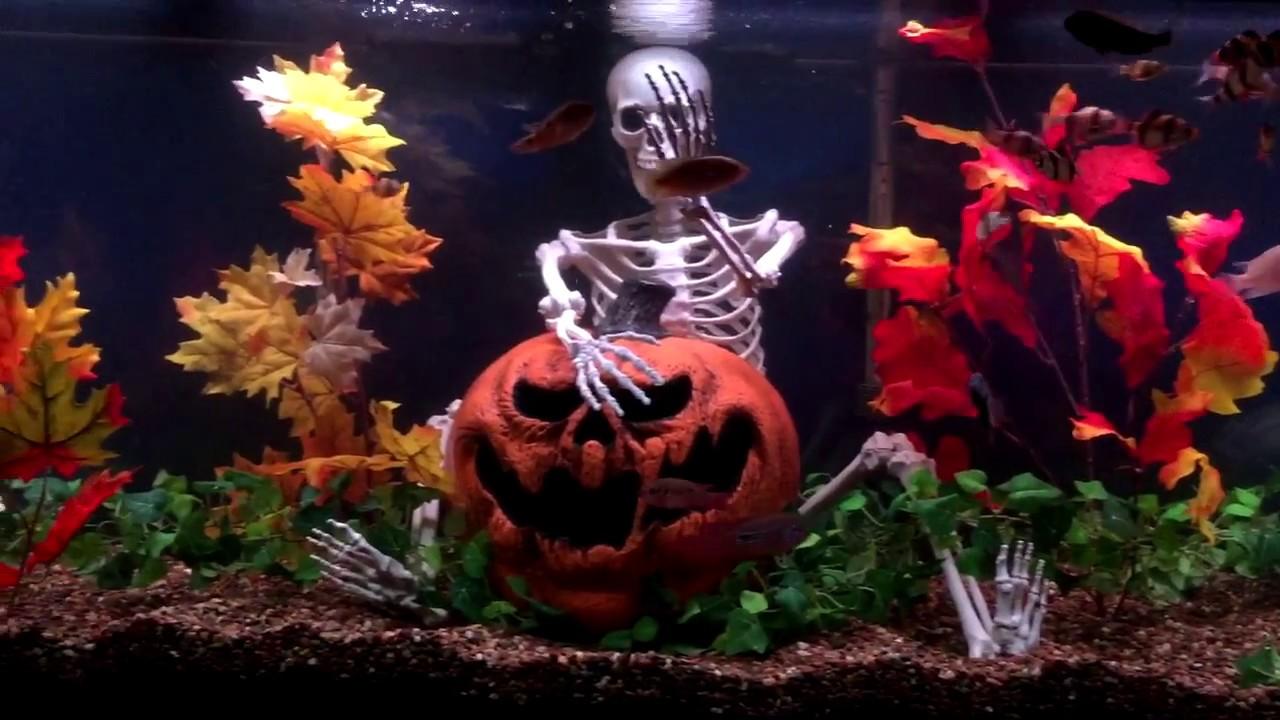 tiger barb aquarium halloween makeover