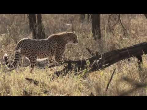 African Safari Adventure in Tanzania - HD