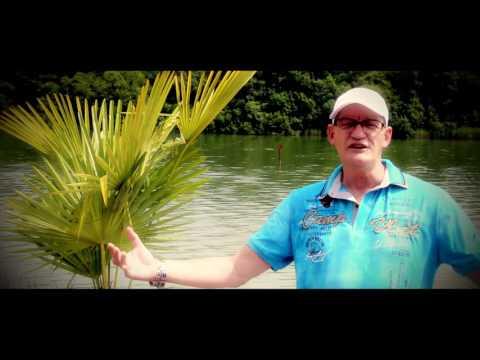 Mike Anthony kijk in mij hart.(nieuwe videoclip)