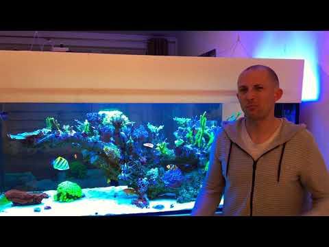 Meerwasseraquarium - Es Geht Auch Günstig