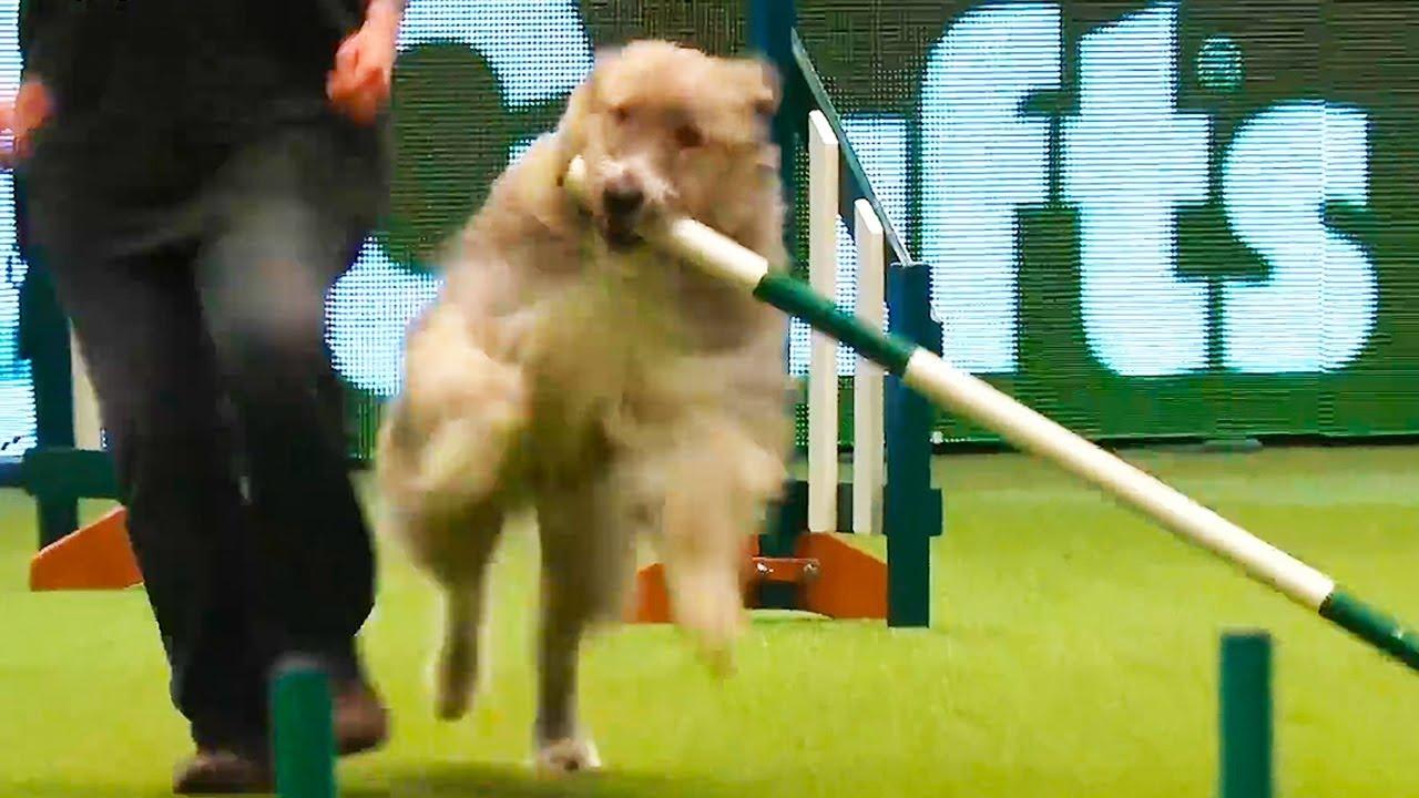 Ozzy Man Reviews: Greatest Show Dog Ever Returns!