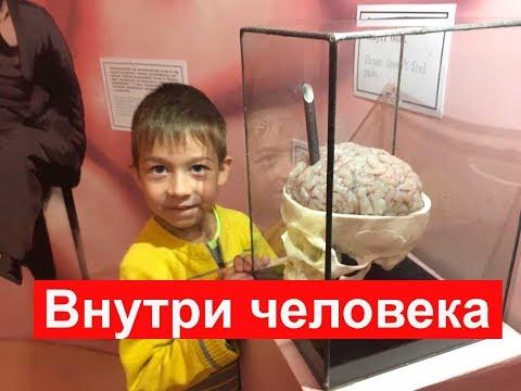 Смотреть фото Музей внутри человека на ВДНХ.  Куда сходить с ребенком в Москве новости россия москва
