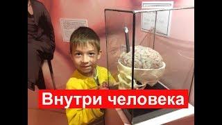 Смотреть видео Музей внутри человека на ВДНХ.  Куда сходить с ребенком в Москве онлайн