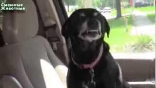 Смешные Собаки Улыбаки 2014 NEW