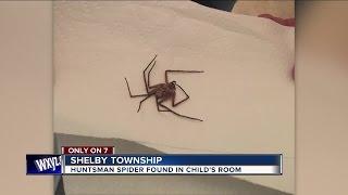 Giant spider found in child