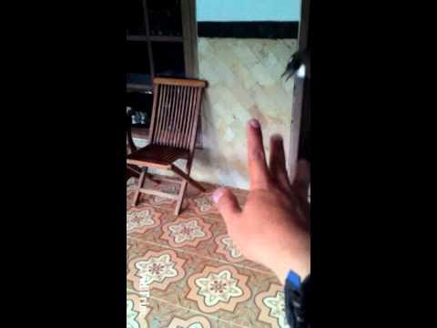 Sikatan/Kipasan (white throated fantail)