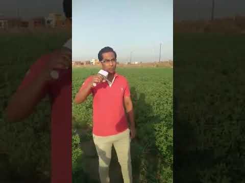 Arshad pathan song