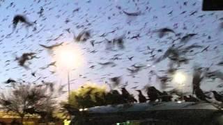 The Bird Invasion