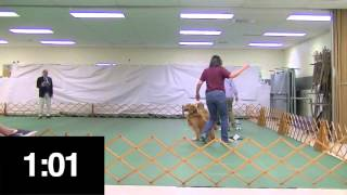 Akc Novice Obedience And Beginner Novice Obedience