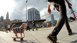 "Purin has been getting better at skateboarding. Song by Westlife ""C..."