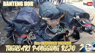 BANTENG DOR ngarak MANTEN SUNAT - TUGUSARI PANGGUNG REJO Live GLANGGANG TUMPANG