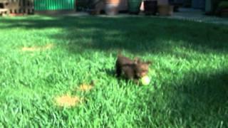 Anna (cairn Terrier Mix) - Furryfriendsrescue.org