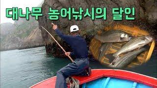 대나무농어낚시의 달인 [어영차바다야+]