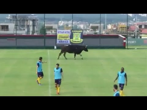 INVASIONS OF ANIMALS IN FOOTBALL GAMES