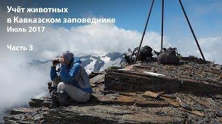 Учет животных в Кавказском заповеднике. Июль 2017. Часть 3.