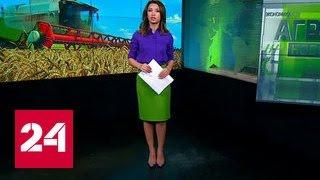 видео Будущее сельскохозяйственных рынков