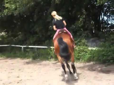 Интернет-магазин конной амуниции конный двор товары для конного спорта и лошадей. Недорогие цены, москва и спб.