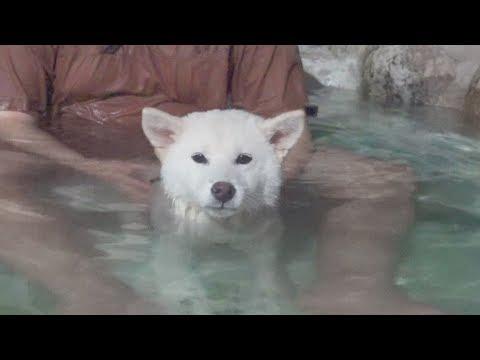 Dog Enjoying Hot Spring