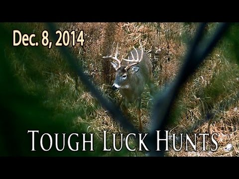 Midwest Whitetail | Iowa Big Buck Encounters
