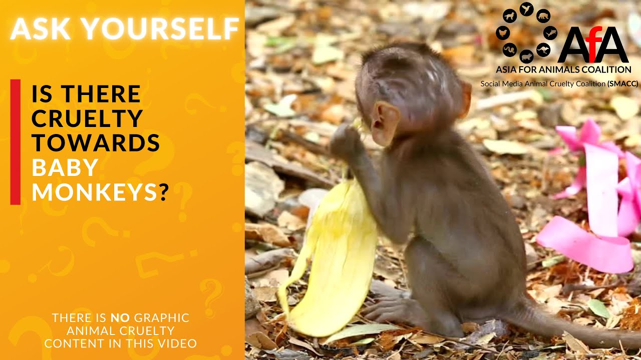 ASK YOURSELF - is there cruelty towards baby monkeys?