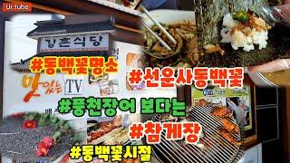 동백꽃명소 선운사 고창풍천장어집 참게장 #강촌식당