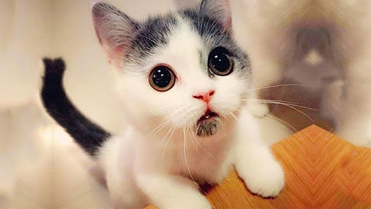 Kawaii Kitten