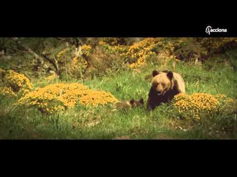 El Bosque ACCIONA y la recuperación del oso pardo