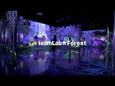 teamLab forest / チームラボフォレスト