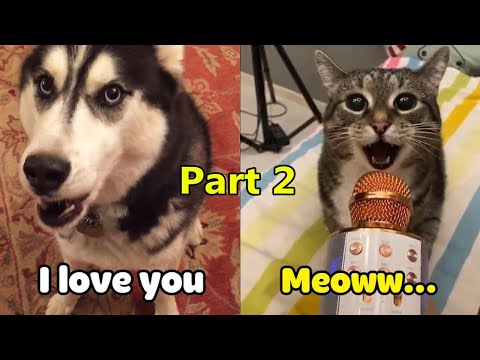 OMG! These Cats  & Dogs  Speak English! - Pets Language   Pets Story Video 2020 [part 2]