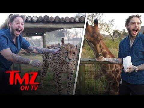 Post Malone Has a Wild Animal Adventure | TMZ TV