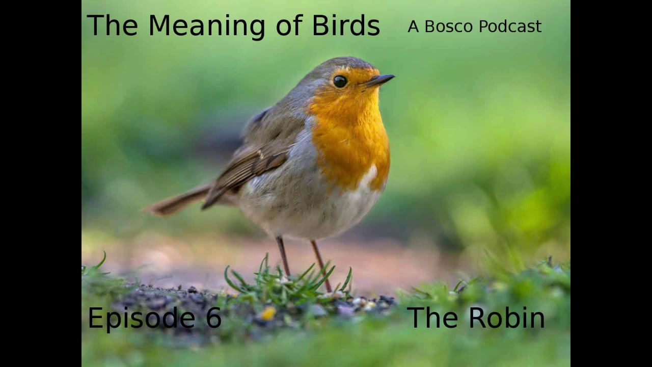 Robin Bedeutung