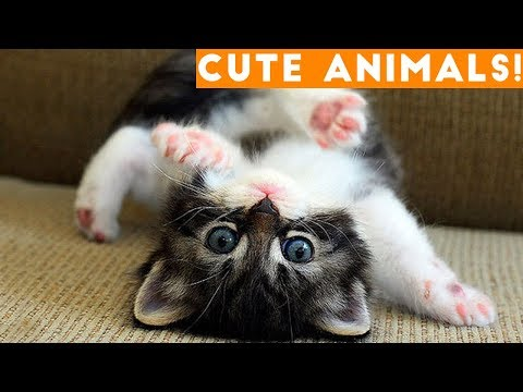 Cutest Pets of the Week Compilation January 2018 | Funny Pet Videos