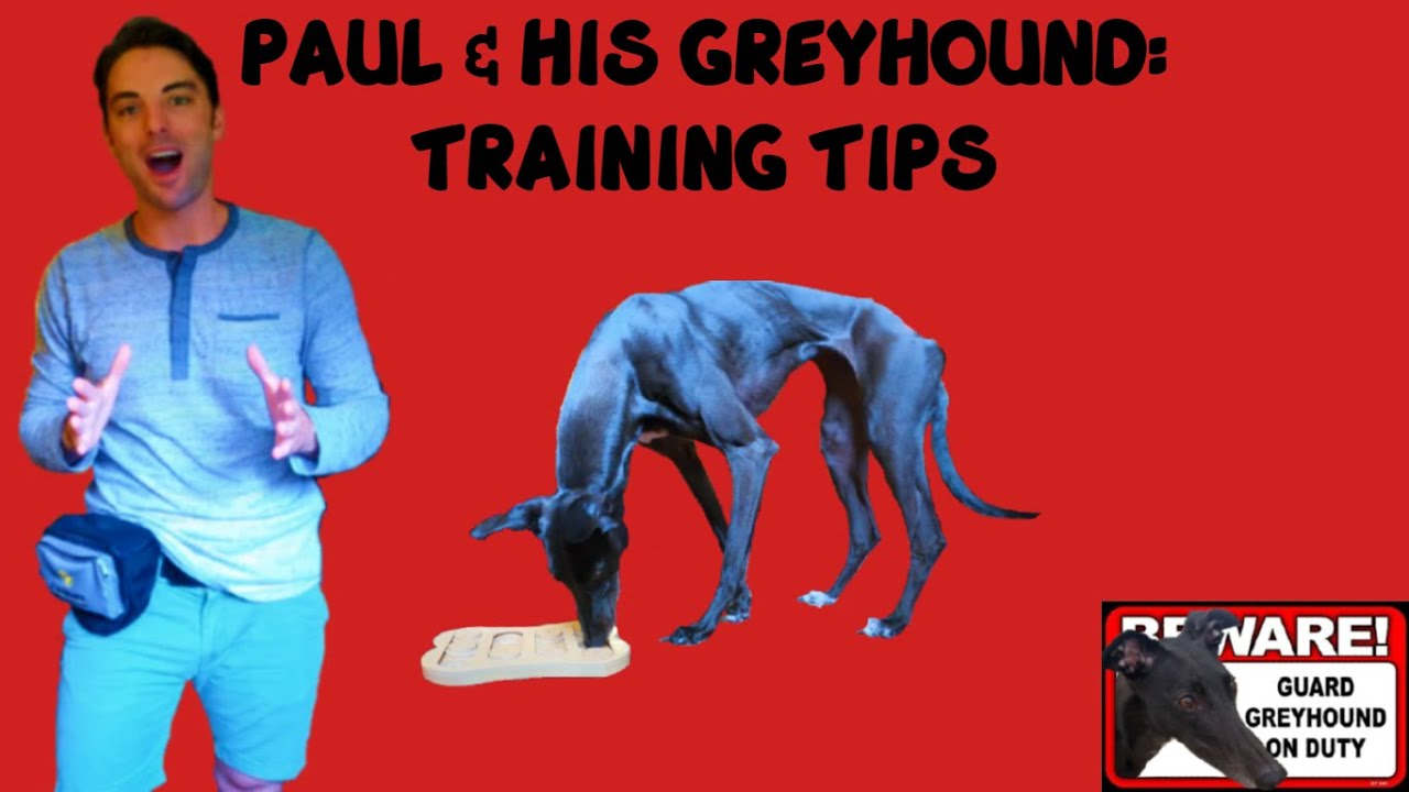Seven Tips For Greyhound Training