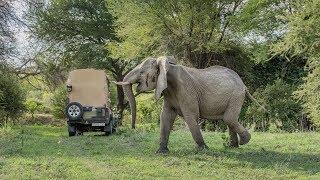 Amazing Safari in Ruaha, Tanzania 2017 (4K-Video)