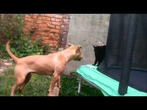 Luna vs Rossi (dog vs cat)